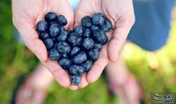 فوائد التوت الازرق واضراره الصحية التوت الازرق هو واحد من انواع التوت الاكثر شعبية في جميع انحاء العالم وهي اخبار جيدة بالطبع لان فو Blueberry Food Nutrition