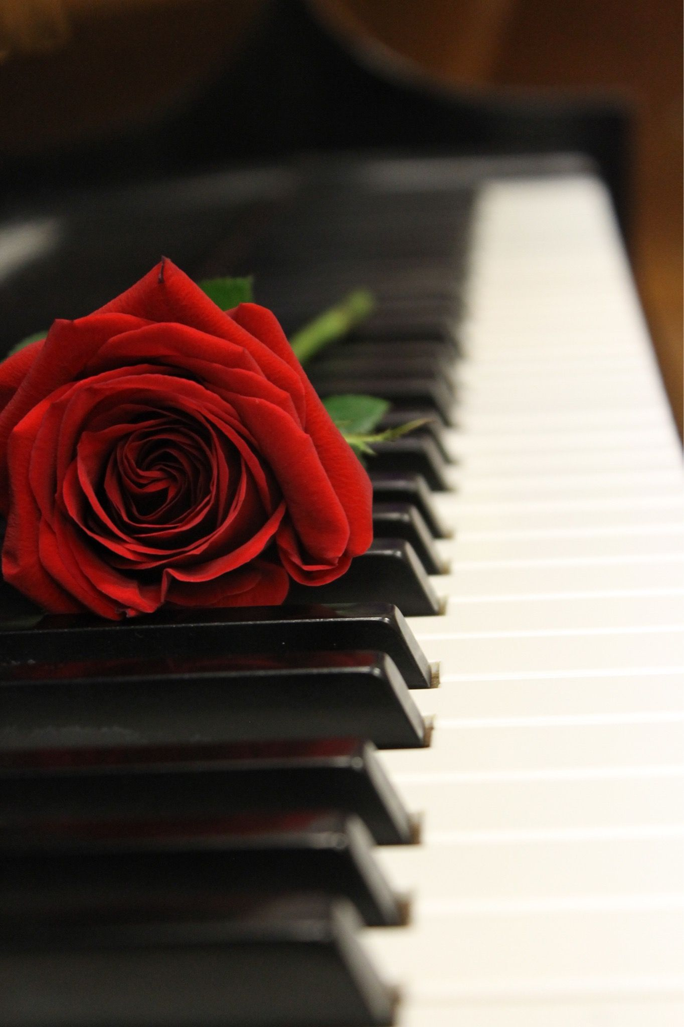 Pin By Brooke Petefish On Artsy Fartsy Music Wallpaper Rose Wallpaper Flowers Photography