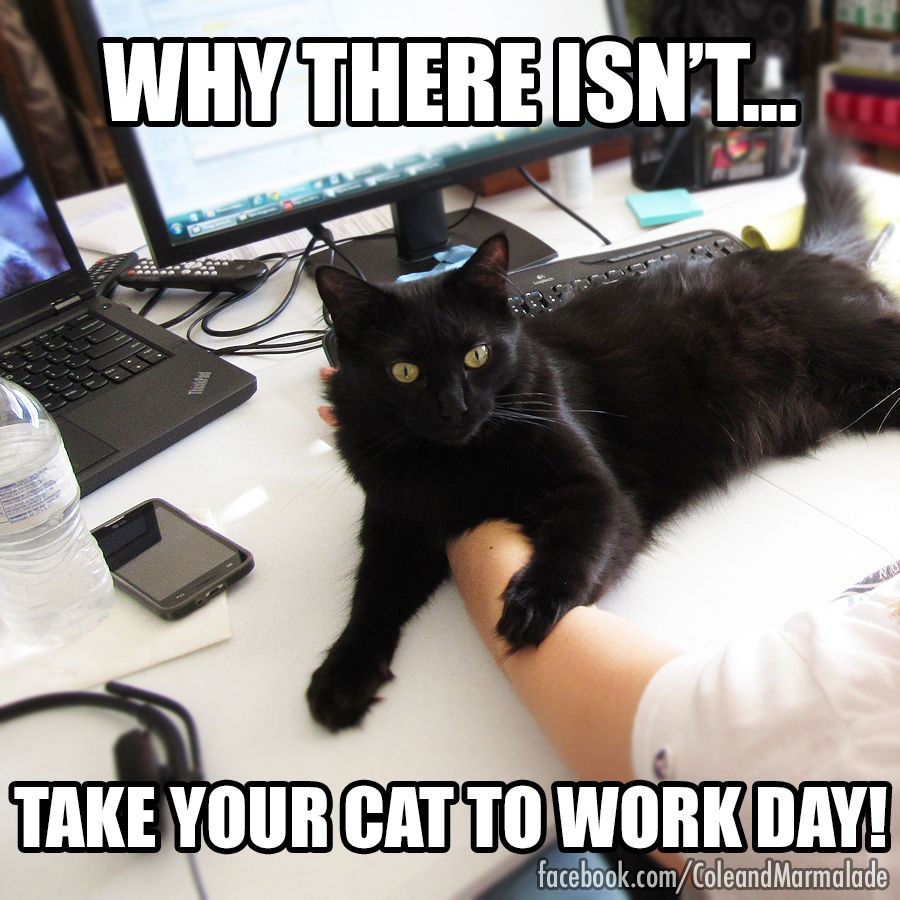 cats work office Cute cat