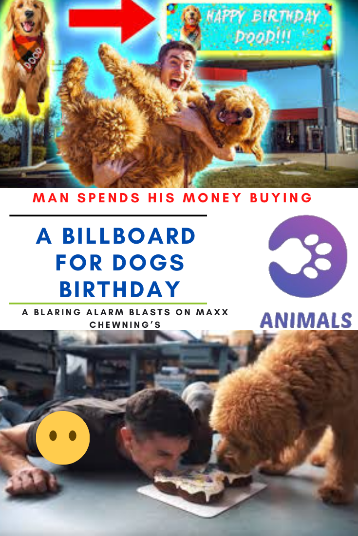 Man Spends His Money Buying A Billboard For Dogs Birthday