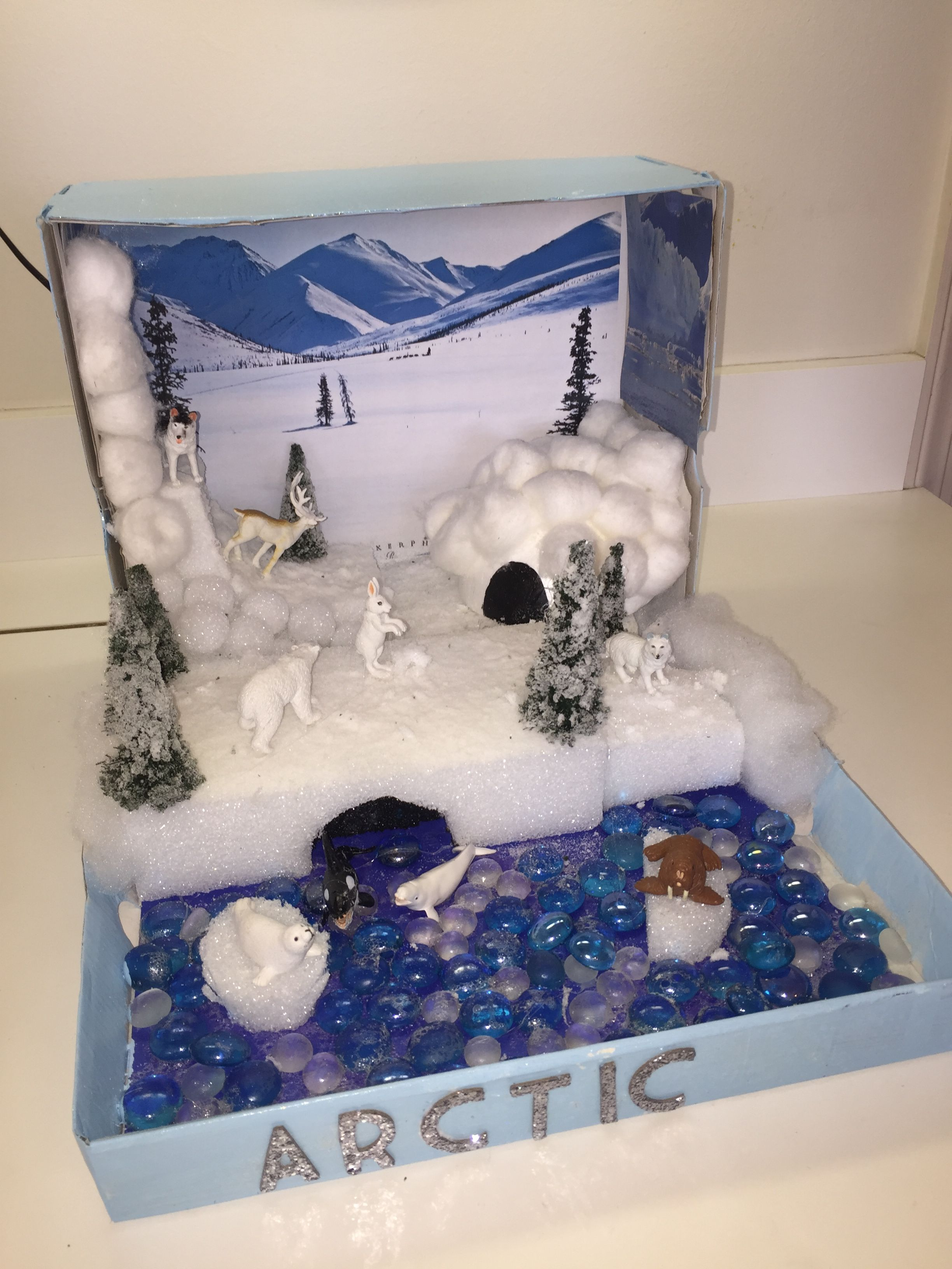Shoe Box Australia Arctic Habitat Diorama Arts And Crafts Arctic Habitat