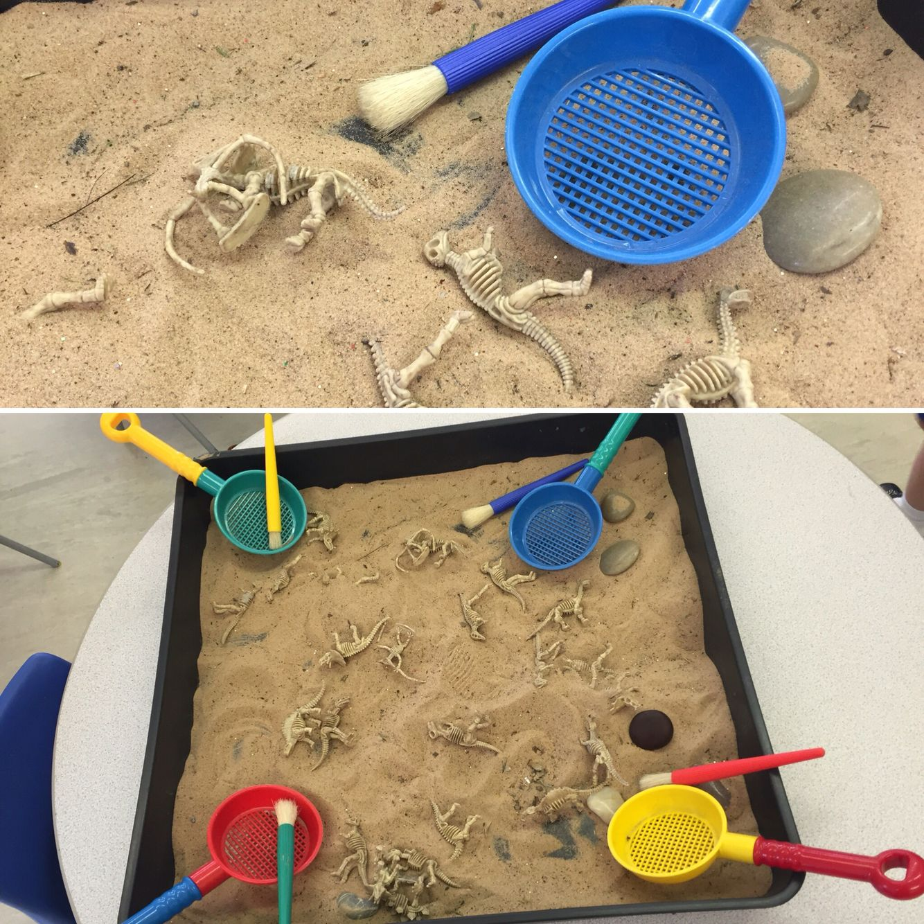 Dinosaur excavation in sand. Use sieves, brushes and dinosaur skeletons to investigate and discover!