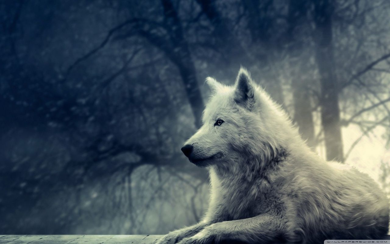 Best Wolf Wallpaper Ideas On Pinterest How To Draw Dogs Dog