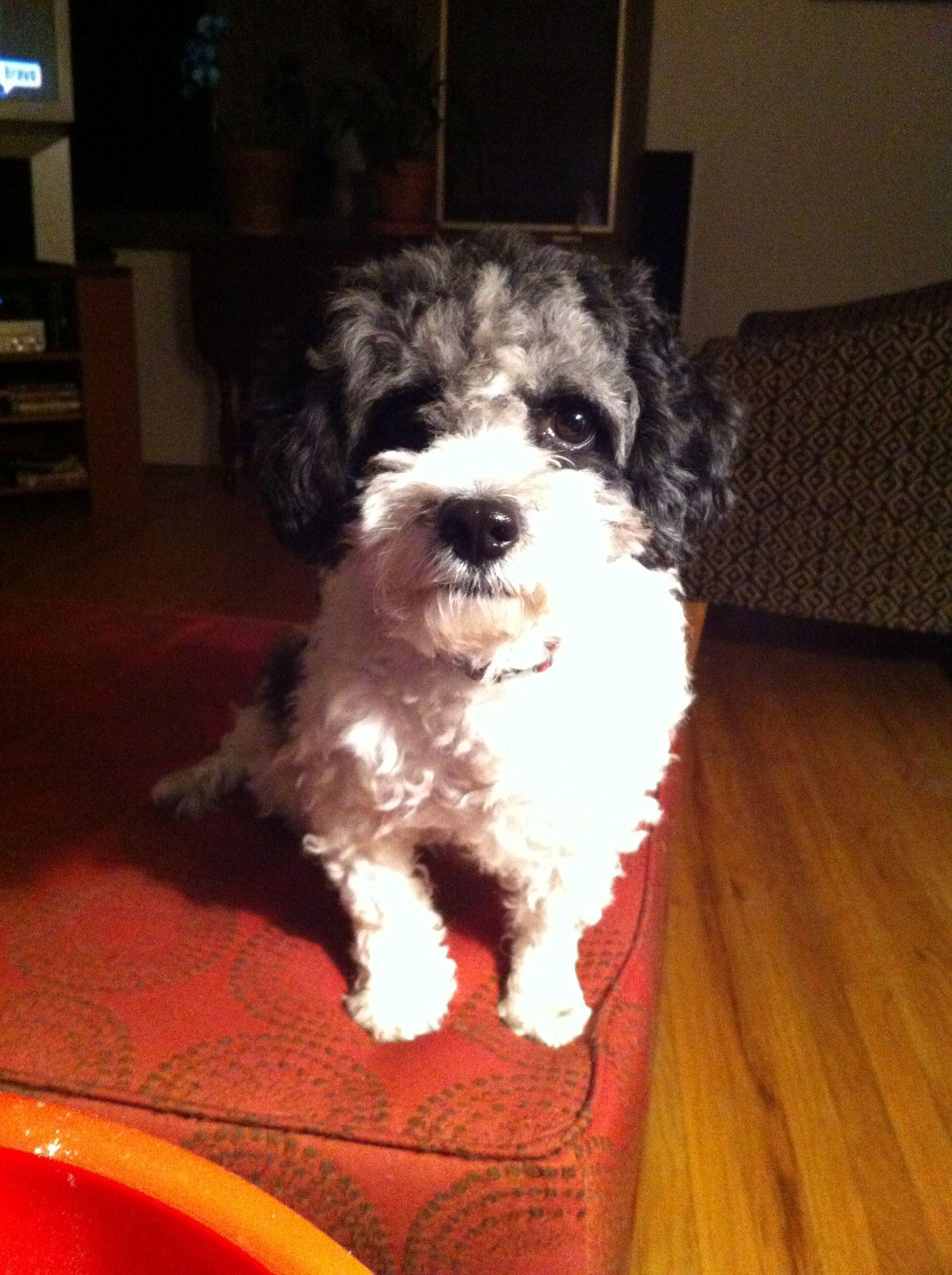 Lulu awaits popcorn