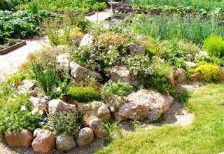 Ideas For Your Garden: Stony Gardens And Rock Garden
