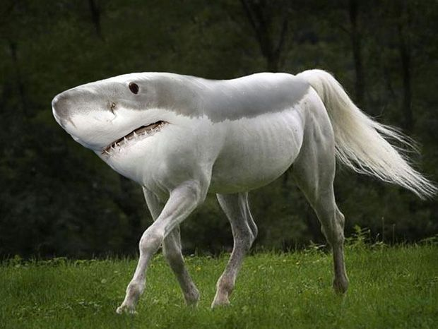 Weird Photos To Photoshop 5