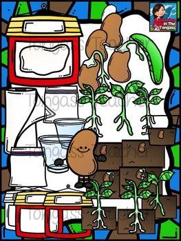 Lima Bean Plant Life Cycle Clipart Bundle