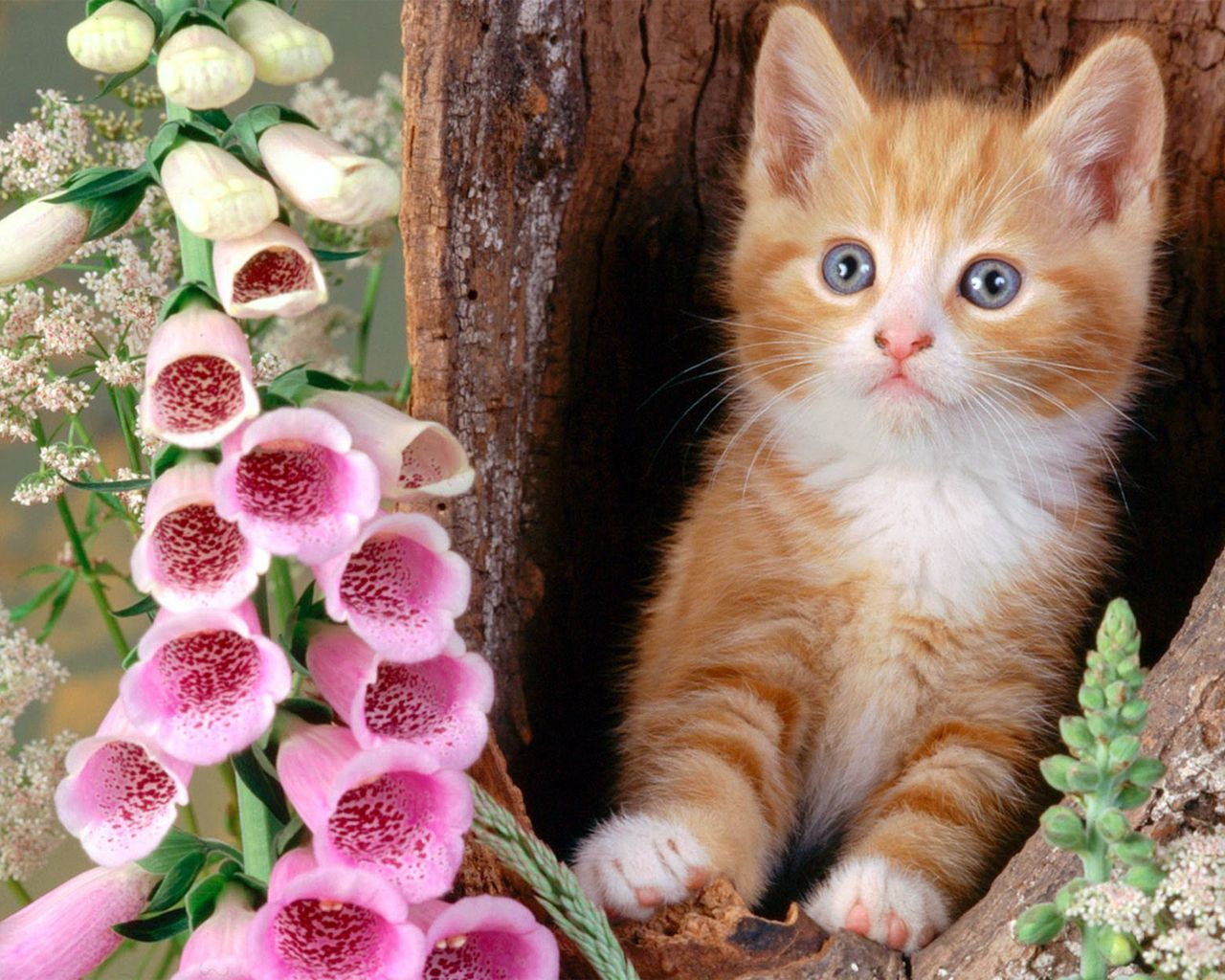 Cute Cats And Kittens Looking For Great Cat Pictures Description From Pinterest Com I Searched For This Cute Cat Wallpaper Cat Wallpaper Beautiful Cat Images