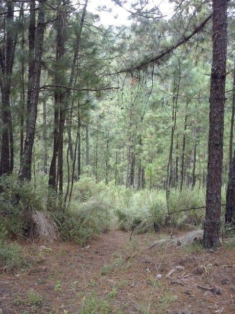 Reserva natural de La Preciosita.