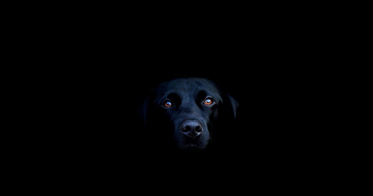 Download Black Dog Wallpapers Top Free Black Dog Backgrounds Download Come And Check Out These Cute Dog And Dog Wallpaper Cute Dog Wallpaper Black Labs Dogs