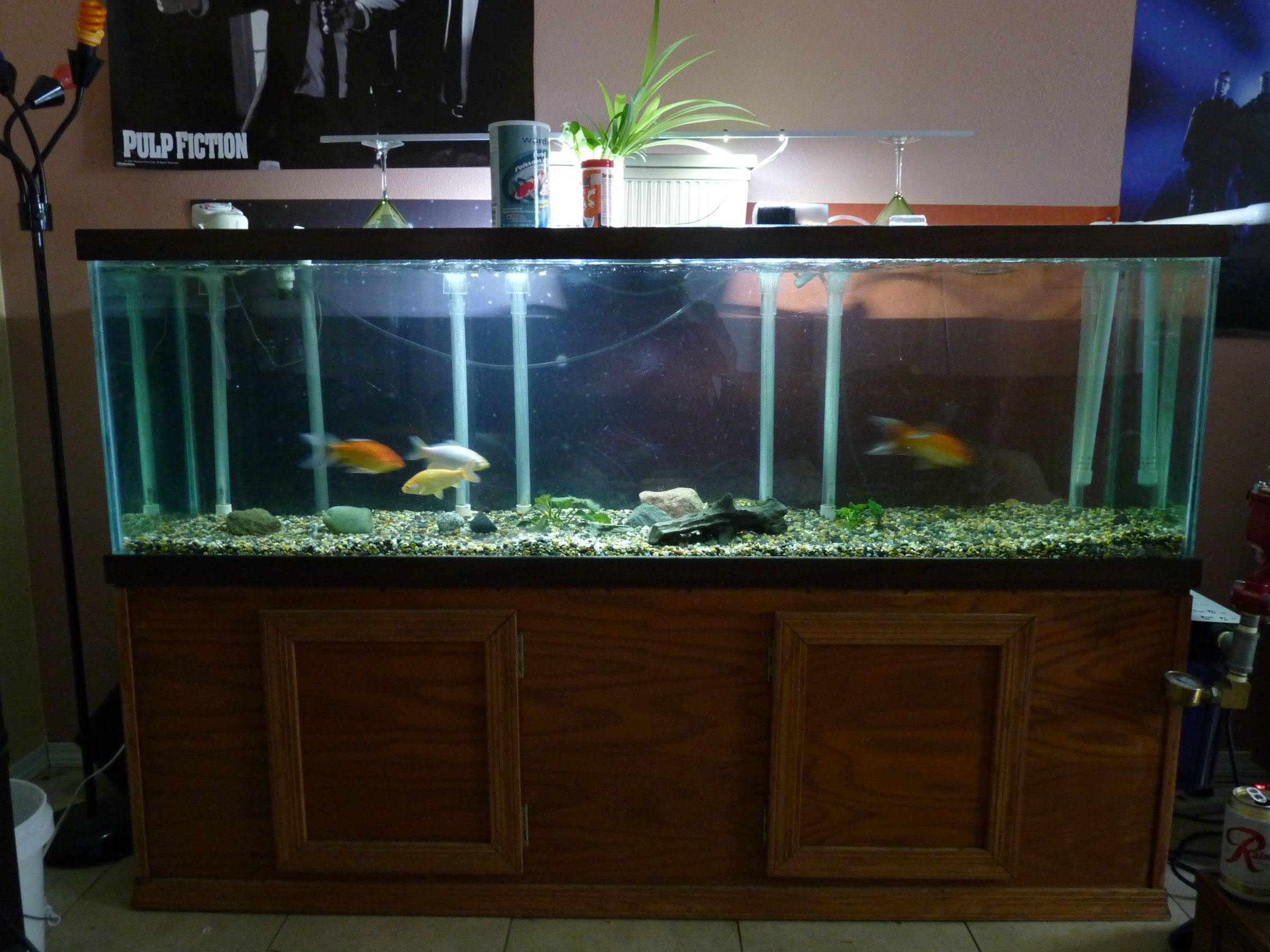 100 gallons aquarium size aquarium ideas pinterest for 75 gallon fish tank dimensions
