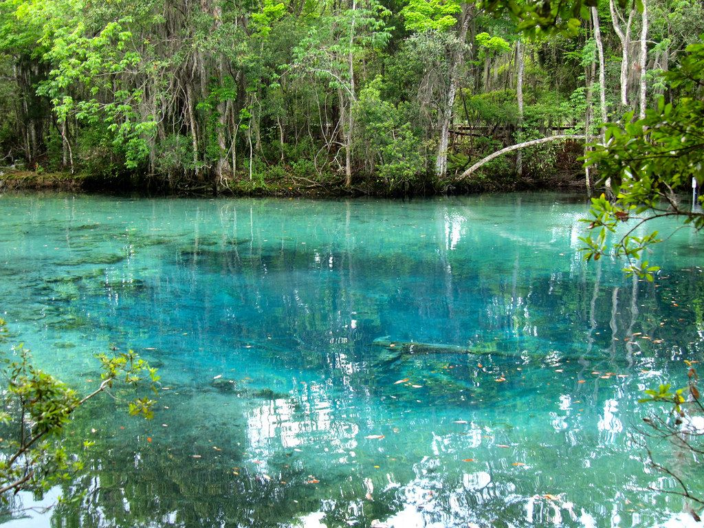 Crystal River Travel Guide 5 Cool Things to Do in Crystal