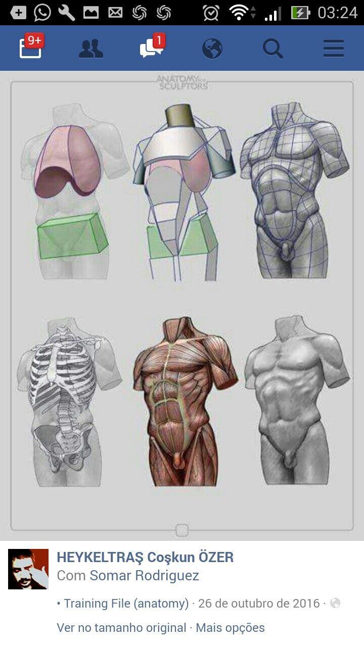 Pin by Omnivorous Broccoli on Male body | Pinterest | Anatomy, Body ...