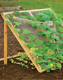 Jardim vertical com tela de galinheiro
