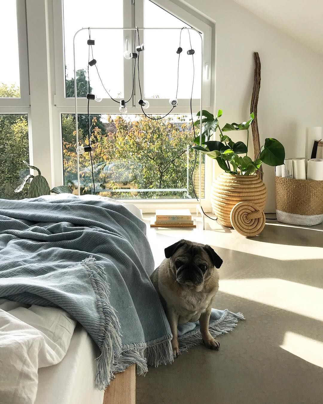 Decke Hellblau Hund Interior Decke Kuscheldecke Wohnen