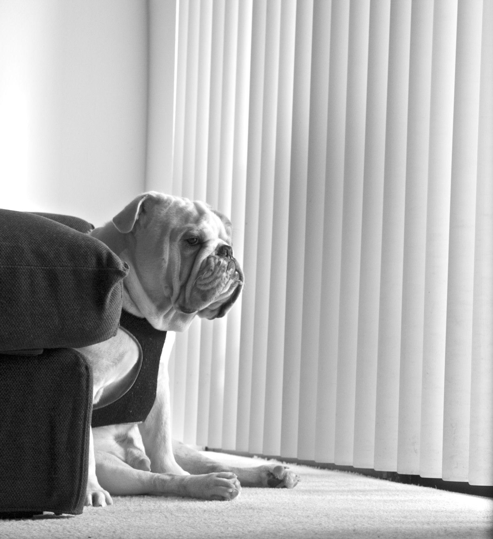 sits and keeps a close watch. Bane. Bulldog.
