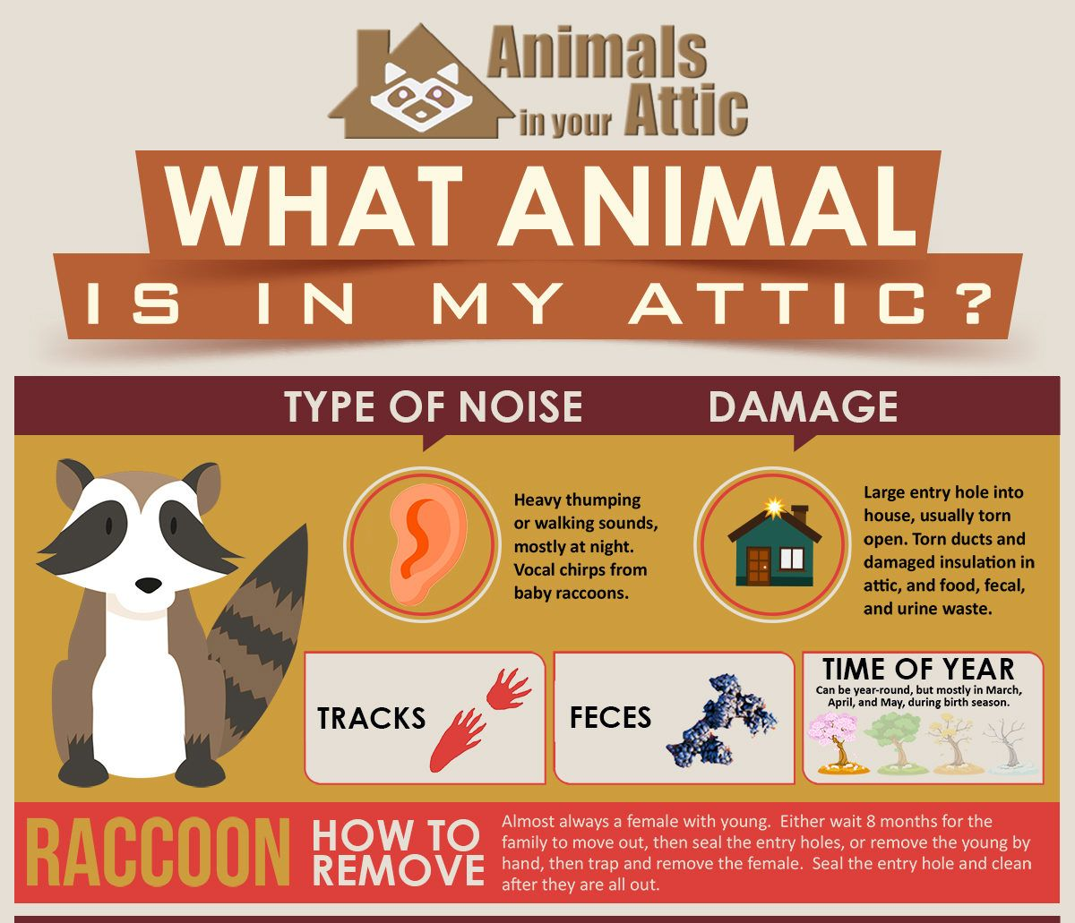 What Animals Are In My Attic An Identification Guide Attic Animals Baby Raccoon