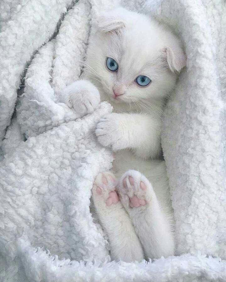 Moment S Katzen Babytiere Baby Katzen
