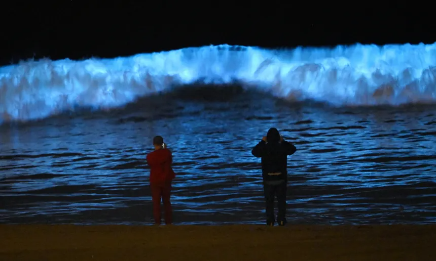 Bioluminescent waves dazzle surfers in California 'Never
