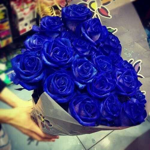Flowers Share Knowledge And Beauty Of Love God Blue Rose Is Infinite In Poem Passion That Renew Live Irradiate A Delecate