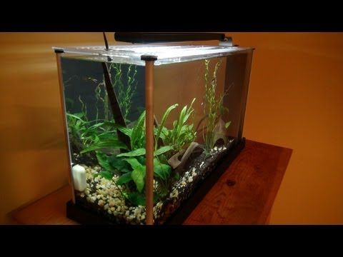 Fluval Spec 5 Gallon: Unboxing U0026 Setup   YouTube