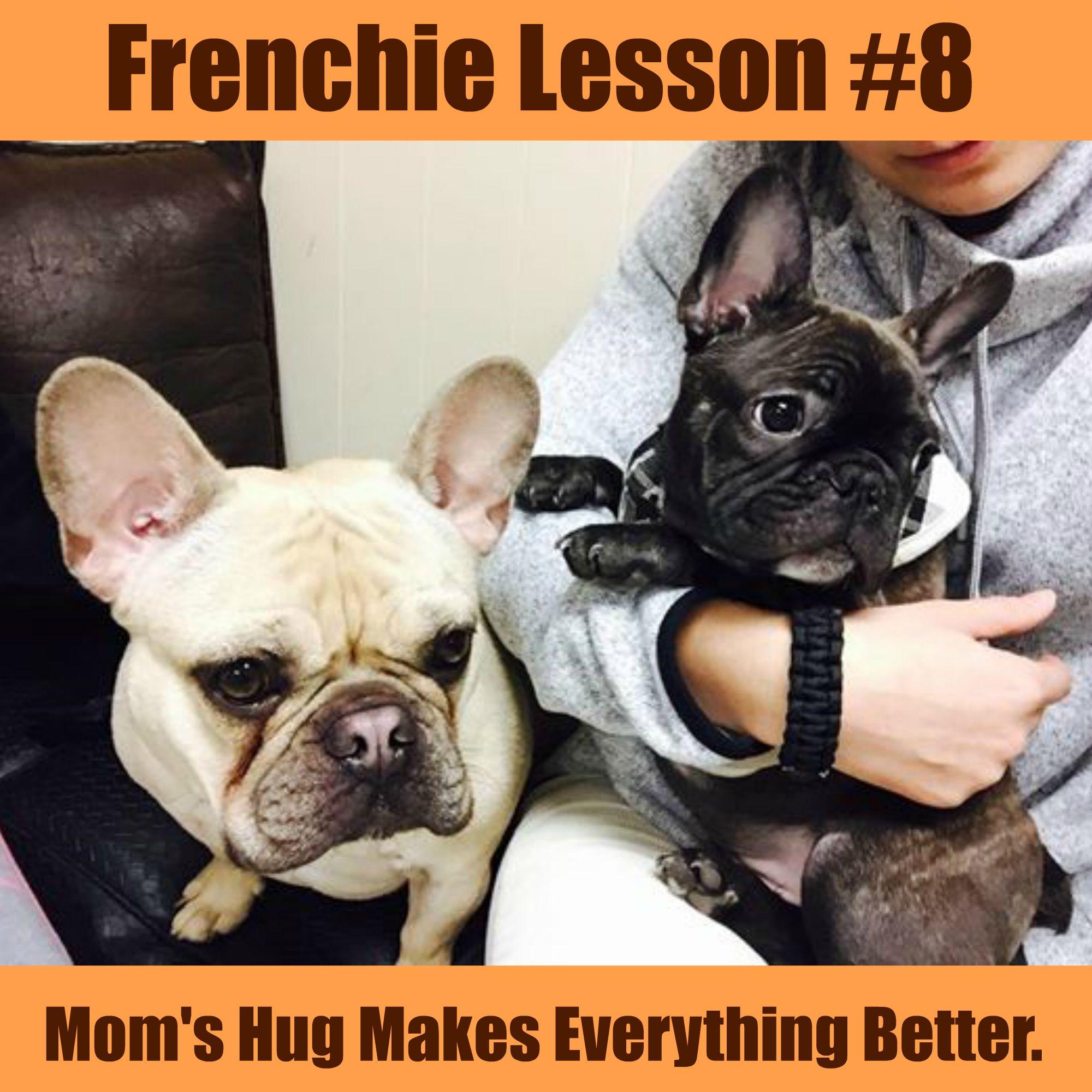 Frenchie Lesson 8 Animal Memes Bob Meme French Bulldog