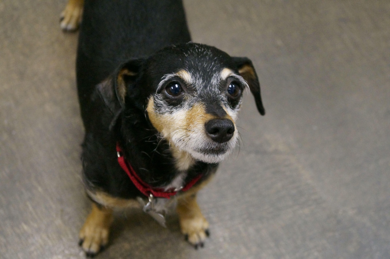 Meet Wynonna An Adoptable Pet Dog Lostourhome Org Tempe Az Share Dogs Pets Dog Adoption