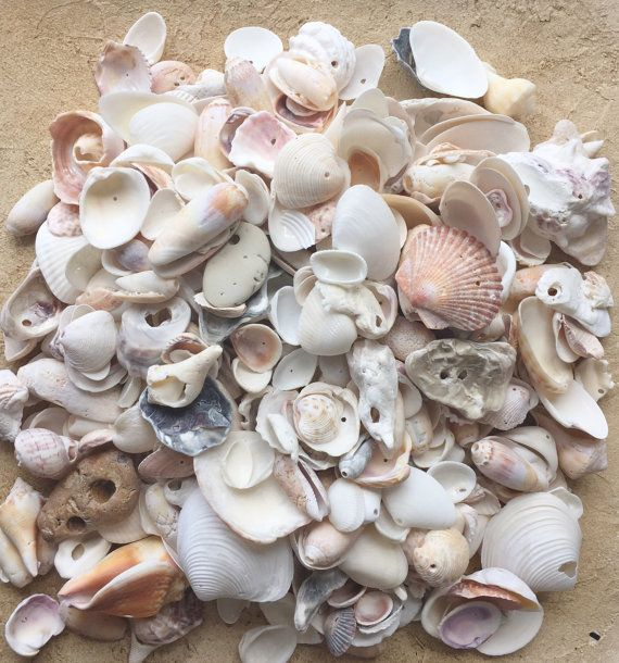 Bulk Seashells 4 LBS / Craft Shells With By
