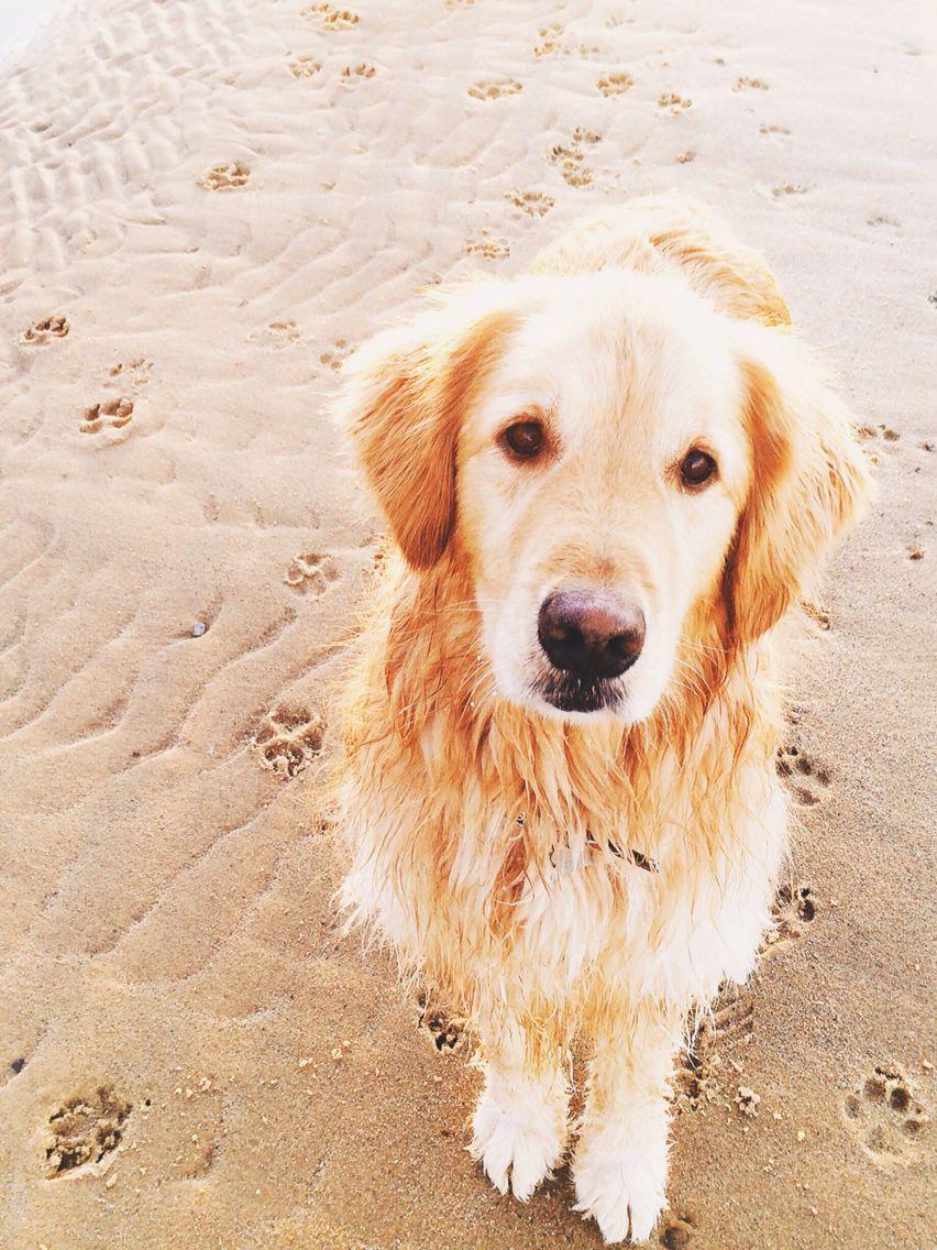 Salty Dog 1 Dog Beach Baby Dogs Dogs