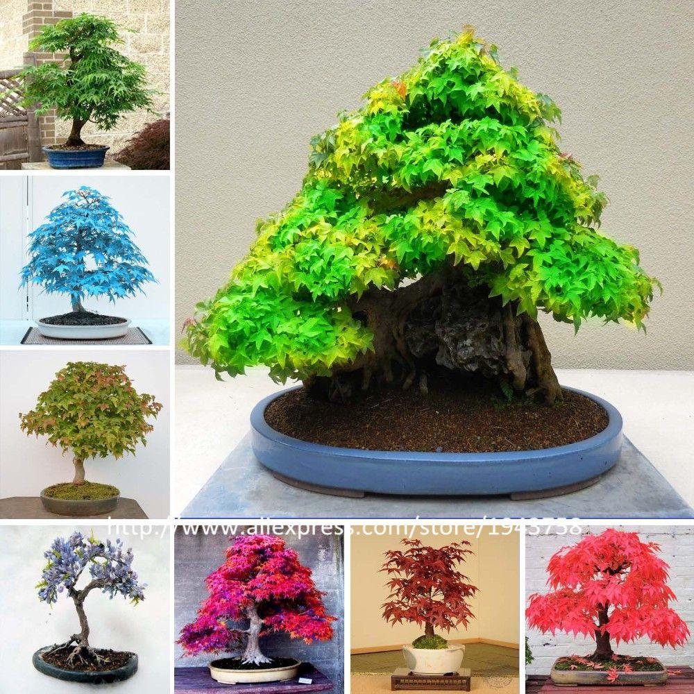 50 Stks-8 soorten Zeldzame Japanse Esdoorn Zaden, Bonsai Boom Zaden, pak voor DIY Thuis Tuin, gratis Verzending