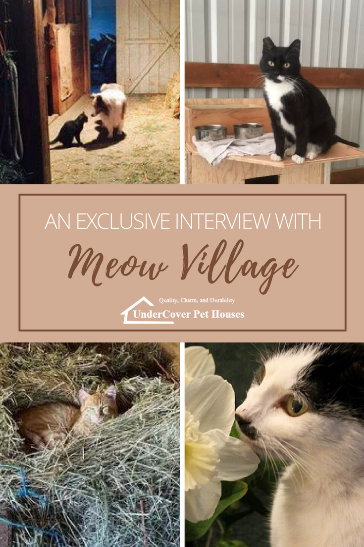 Check out our exclusive interview with meowvillage a feral cat