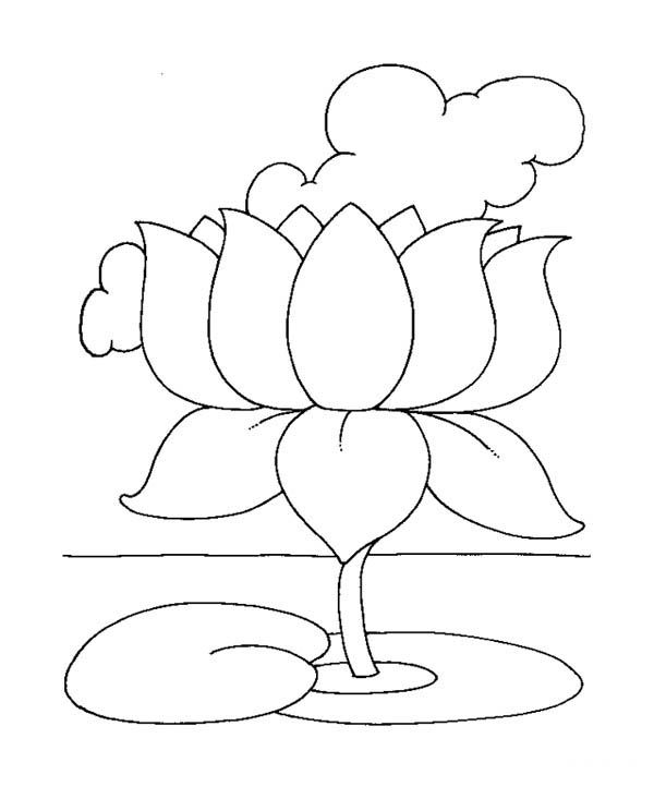 Lotus Flower Coloring Pictures