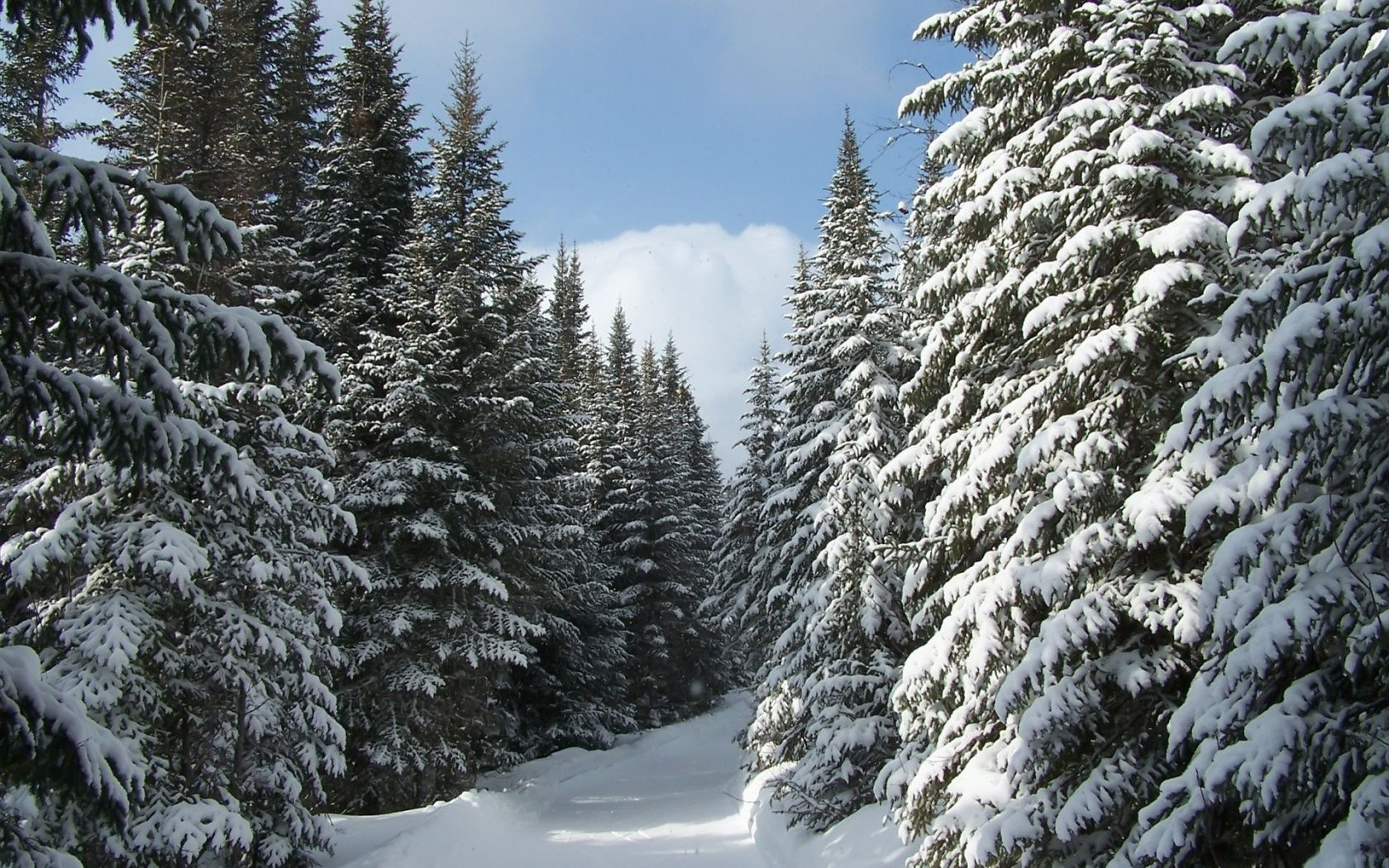 Temperate Coniferous Forests (With images)   Winter forest, Winter ...
