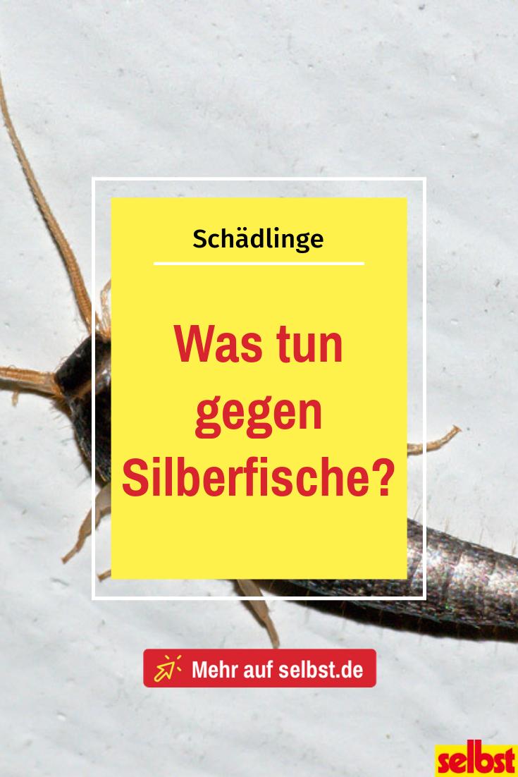 Was Tun Gegen Silberfische Selbst De Silberfische Fische Silberfische Bekampfen