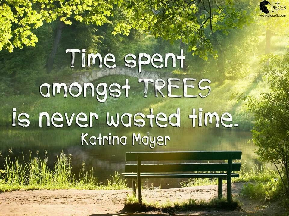 Pin by Tracey Payne on Thoughts Tree, Outdoors adventure