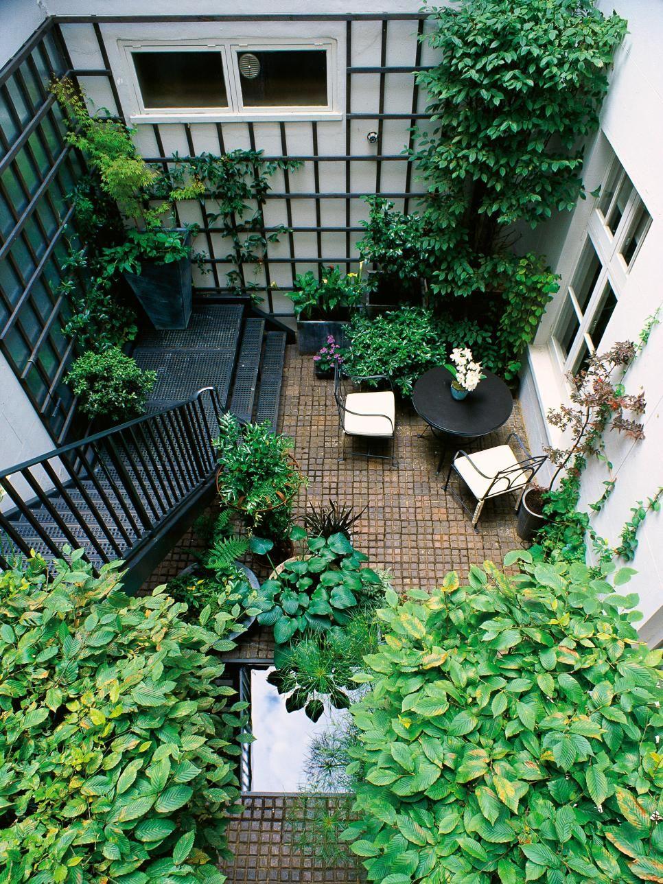This urban terrace garden features green climbing vines latticed