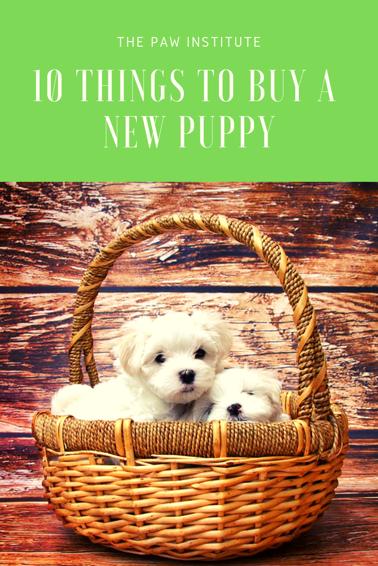 10 Things To Buy A New Puppy Do You Have Everything You Need For