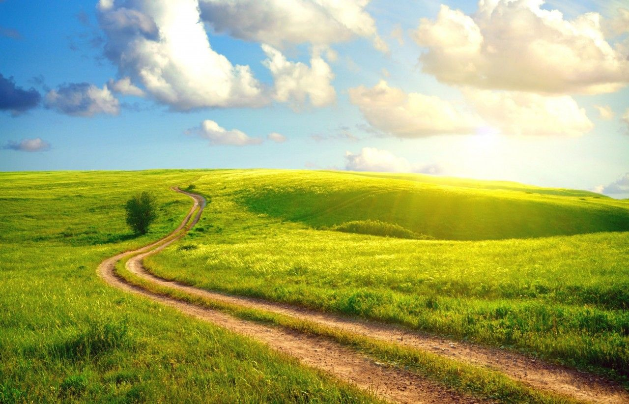 In A Sunny Day Road Goes Throough Forest Summer Landscape Landscape Summer Wallpaper Hd wallpaper field road summer grass