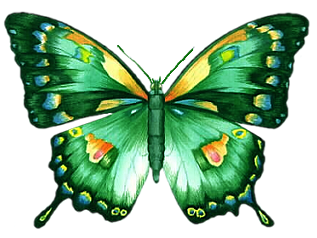 Animaatjes Vlinders 03390 Png 317 238 Pixels Butterfly Photos Butterfly Images Beautiful Butterflies