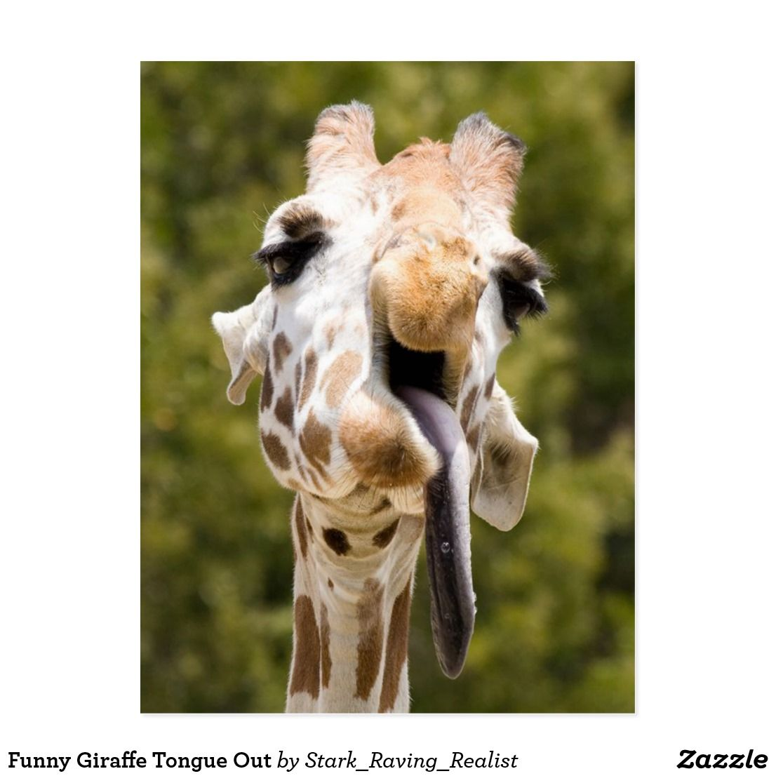 Funny Giraffe Tongue Out Postcard