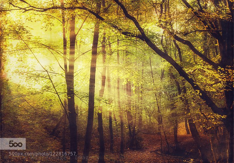 shining in by dyrkwyst #nature