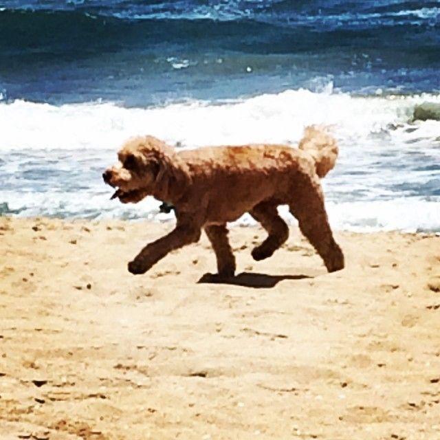 @ashleesarajones Instagram follow now Happy bday my little 35 year old man!! #sparky #bday #5yearsold #huntingtonbeach #beach #summer #california #cali