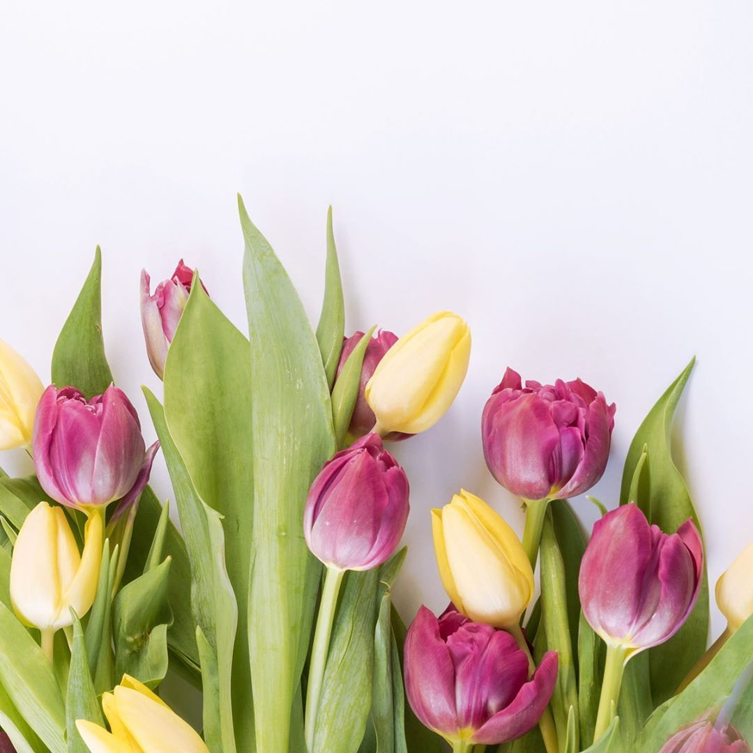 A Flower Shop In Portland Maine Is The Setting For Fatal Whispers Book 2 In The Megan Scott Michael Elliott Myste Yellow Tulips Tulips Flowers Flower Images