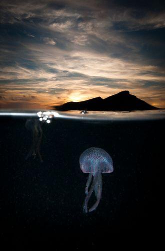 Underwater Photographer Eduardo Infantes Oanes's Gallery: Above & Below: Jelly sunset - DivePhotoGuide.com