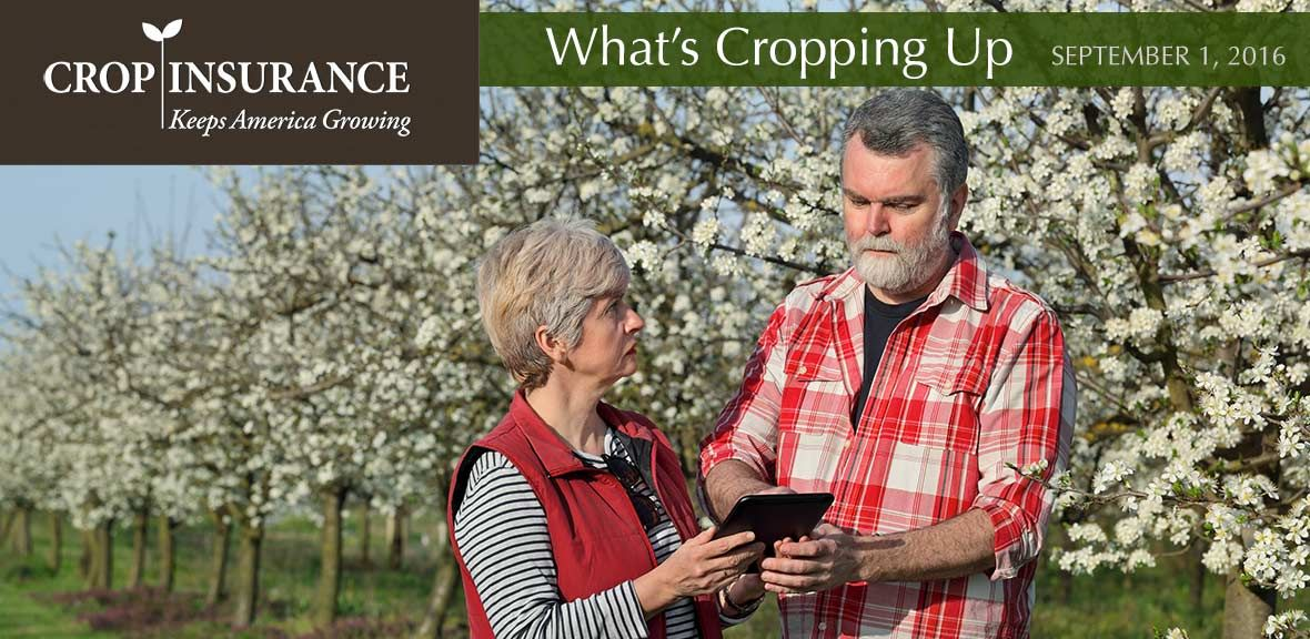What They're Saying About Crop Insurance Crop insurance