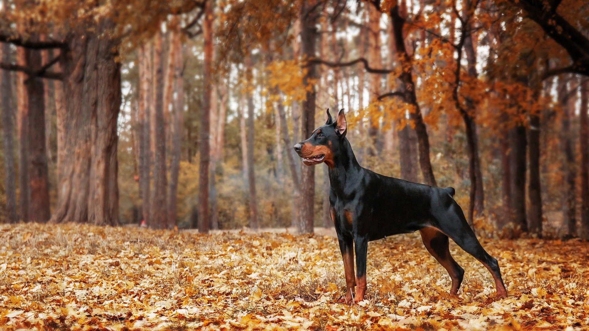 Pin de Santiago Gil en Animales en 2020 Razas de perros