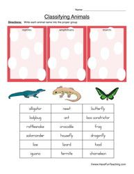 Classifying Animals Worksheet - Reptiles, Amphibians, or Insects ...