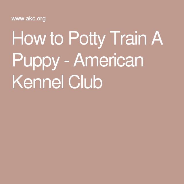 how to train potty train a puppy