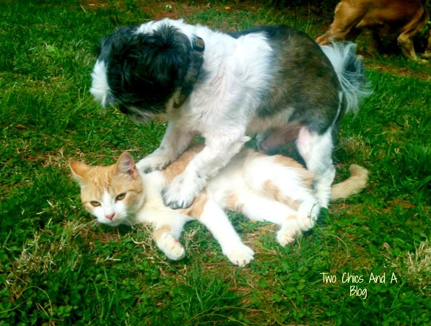 My Dog Tries To Mate With The Cat Lord Help Me Dogs Cats Kitty