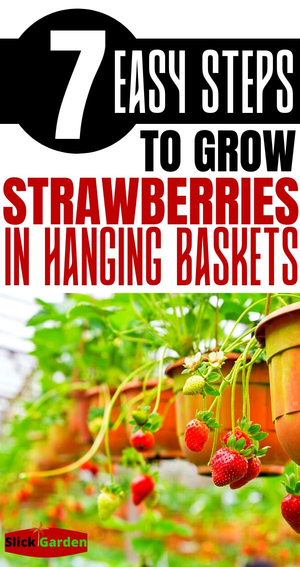 Photo of 7 Easy Steps To Grow Strawberries In Hanging Baskets